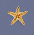 Starfish on wet surface Royalty Free Stock Photo