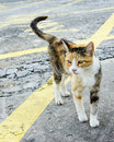 Closeup of a Stray Kitty on a Street of New Orleans, Louisiana Royalty Free Stock Photo