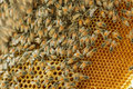 Closeup swarm of honeycomb on tree bee Stock Photo