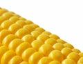 Closeup sweetcorn cob on white Royalty Free Stock Photo