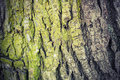Closeup texture of old green tree bark detailed photo background with retro toning correction filter vintage style Stock Image