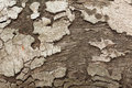 Closeup of tree bark aged aging backdrop background brown close cracked cross detail dry firewood forest grain gray Royalty Free Stock Photography