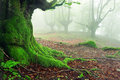 Closeup of tree roots with moss on forest landscape Stock Images