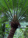 Closeup of tropical palm tree in lush green environment Royalty Free Stock Photo