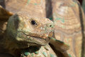 Closeup of turtle head giant Royalty Free Stock Photo