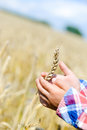 Closeup of two child hands holding wheat spike on golden field outdoor scene in golden tones Royalty Free Stock Image