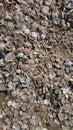 Sea Shells Beach