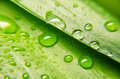 Closeup view of green leaf with water drops Royalty Free Stock Photo