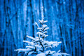 Closeup view of a snow covered christmas tree against blue background dark winter forest and snowfall horizontal format Stock Photo