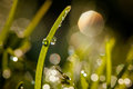 Closeup of waterdrops macro photography in nature Stock Photography