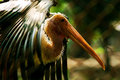 Closeup wild bird head and feather Stock Images