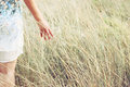 Closeup of a woman hands touching tall grass in field. selective focus. Royalty Free Stock Photo