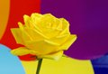Closeup of Yellow rose on colorful background Royalty Free Stock Photo