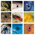 Closeups of different fish eyes from the red sea and the indian ocean Royalty Free Stock Image
