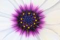 closup flower Daisy