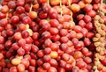 Closure look of the red dates are fruits that have been a staple food middle east for thousands years Stock Image