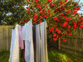 Clothes are drying 3 Royalty Free Stock Photo