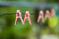 Clothes peg pink on a clothesline Royalty Free Stock Photos