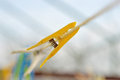 Clothespin hanging by a thread in natural light Royalty Free Stock Image