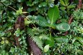 Cloud forest vegetation detail after the rain. Royalty Free Stock Photo