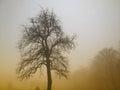 Cloud jabłko kwiaty obszar łąkowego kształtuje charakter słońca drzewa Zdjęcia Royalty Free