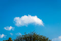 Cloud over tree Royalty Free Stock Photo