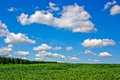 Clouds in afternoon in summer at a bright sunlight Royalty Free Stock Photos
