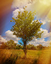 Clouds anf trees rural landscape and sun rays Royalty Free Stock Images