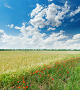 Clouds in blue sky over green field with red poppies Royalty Free Stock Photo