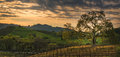 Clouds at sunrise over the vineyard with oak tree Royalty Free Stock Photo
