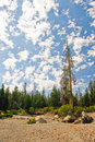 Cloudscape over forest Stock Photo