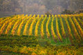 Cloudy autumn in Wachau valley Royalty Free Stock Photo