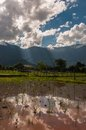 Cloudy blue sky reflect in rice paddy field champasak laos Stock Photos
