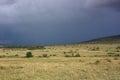 Cloudy day in masai mara national reserve kenya Royalty Free Stock Photography