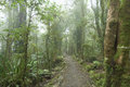 Cloudy rainforest. Royalty Free Stock Photography