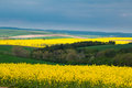 Cloudy sky above the hilly fields czech republic south moravia with rapeseed flowers and green wheat ominous Royalty Free Stock Photo