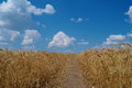 Cloudy sky and field golden Stock Photo