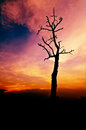 Cloudy stormy sky a new day high altitude dawn dry tree Stock Photos