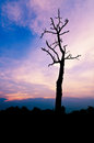 Cloudy stormy sky a new day high altitude dawn dry tree Stock Photography
