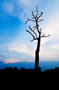 Cloudy stormy sky a new day high altitude dawn dry tree Stock Photo