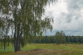 Cloudy view august landscape on weather with birches on the right Stock Image