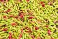 Clove harvest Royalty Free Stock Photo