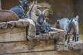 Cloven hoofed animals in the zoo picture is shot lagos portugal Stock Images