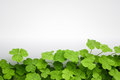 Clover background Royalty Free Stock Photo