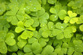 Clover Backgrounds Royalty Free Stock Photo
