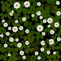 Clover on black background seamless leaves and flowers pattern at patrick s day Royalty Free Stock Photography