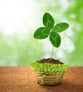 Clover in decorative pot Royalty Free Stock Photo
