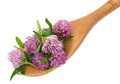 Clover flower tea on the wooden spoon Royalty Free Stock Photo