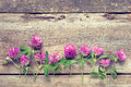 Clover Flowers On Wooden Backg...