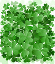 Clover garden Royalty Free Stock Photo